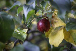 ttronslien-9838 paleo diet review